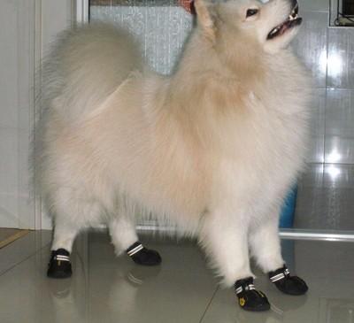Al1 Ботиночки для собак теплые с мехом черные, размер №1, №2, №3, №4 (фото, вид 1)
