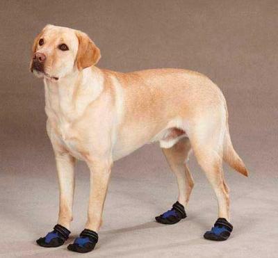 АНТ Сапоги Casual Canine для средних и крупных собак, р. XS, M, на флисе, с сеточкой (фото, вид 2)