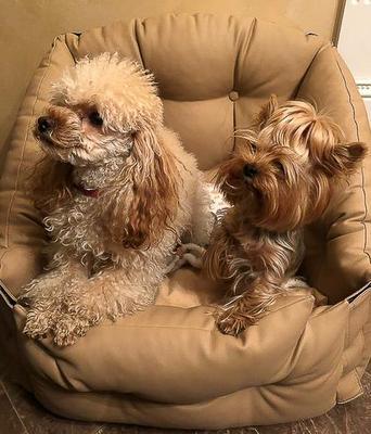 ДогСмит Автокресло для собак, 50х50х50/25см (фото, вид 12)