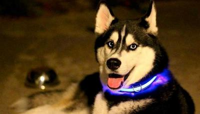 АНТ Ошейник светящийся на светодиодах Pet Collar с USB, 3 размера (фото, вид 6)