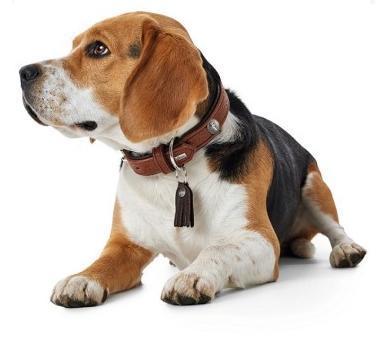 Hunter Ошейник для собак Cody 55 (42-48 см)/3,5 кожа бизона коньячный/темно коричневый (фото)