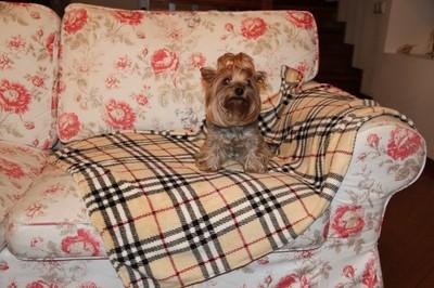 Бобровый дворик Плед для собак и кошек, шотландка бежевая, размер 100х75см (фото)