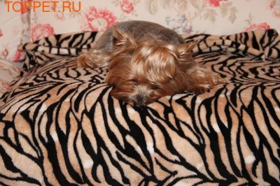"Бобровый дворик Плед для собак и кошек ""Тигр"", размер 100 х 75см"