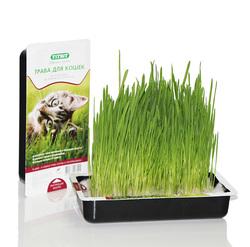 ТИТБИТ Трава для кошек овес, 40г