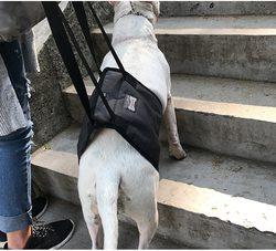 Al1 Шлейка для травмированных и пожилых собак серая, размер М
