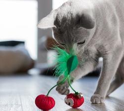 """Petstages Игрушка для кошек Dental """"Вишни"""" с кошачьей мятой, 7 см"""