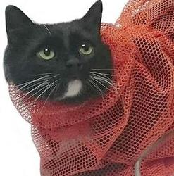 Osso Fashion Сумка-сетка для мытья и груминга кошек и мелких животных, размер M, L
