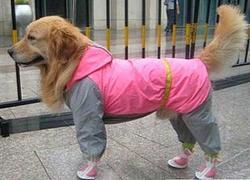 АНТ DefPet Дождевик для крупных пород собак, серо/розовый, размер Xl, спина 65см