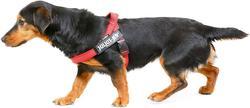 K9-Sport JULIUS Шлейка для собак Ремни Color & Gray IDC®, красный