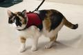 Beeztees Шлейка для кошек с поводком и колокольчиком