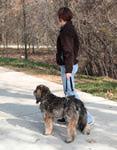 Solvit Пояс для пожилых, травмированных собак