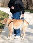 Solvit Шлейка для пожилых, травмированных собак CareLift