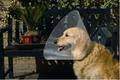 Beeztees Защитный воротник для собак пластиковый