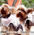 I's Pet Шлейка для собак коричневая с поводком 1,2м, размер М, L