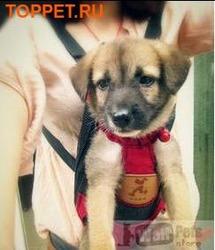 Al1 Рюкзак-переноска для собак красный, размер М