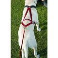 Ultra Paws/АНТ Шлейка для ездовых собак, красная
