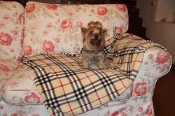 Бобровый дворик Плед для собак и кошек, шотландка бежевая, размер 100х150см